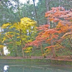 楽山公園 今日の紅葉