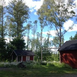 美しいスウェーデンの夏と、withコロナの夏。