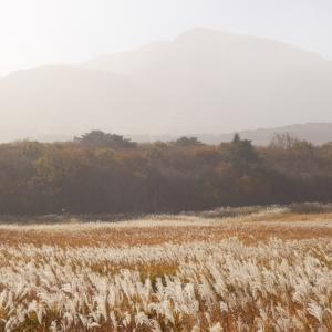 【秋のくじゅう九重長者原】タデ原湿原『自然研究路』で紅葉トレッキングを満喫!!【自然散策】