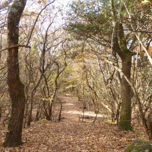 大分・熊本観光マニアおすすめ!!大自然を静かに楽しめる5つの穴場お散歩コースをご紹介します!!