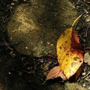 秋はいずこ?
