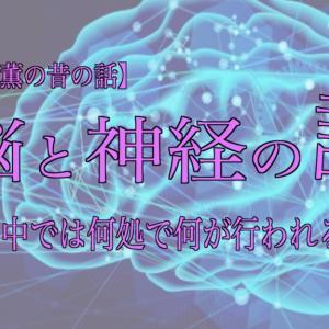 脳と神経の話 その②  〜頭の中では何処で何が行われるのか〜 【山吹薫の昔の話】