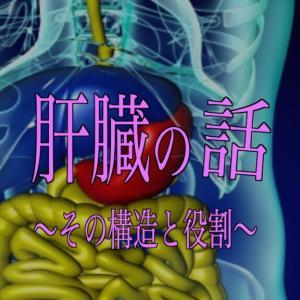 肝臓の話 その①  〜その構造と役割〜
