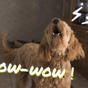 犬が吠える理由とシーン別の対処法!無駄吠えがうるさいと感じる方へ