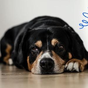 犬のストレスに気付いてあげて!10個の原因とストレスサイン