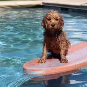 犬も水遊びが大好き!だけど気をつけたい熱中症と水中毒