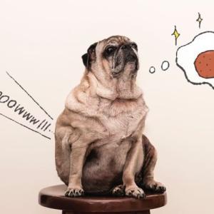 あなたの犬、太り過ぎてない?肥満が引き起こす病気とダイエット方法