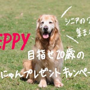 シニアのワンちゃん集まれ♪【PEPPY】目指せ20歳のわんにゃんプレゼントキャンペーン!