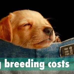 犬の飼育にかかる費用はいくら?初期費用〜1生涯にかかる金額まとめ