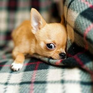 寒さに弱い犬、強い犬の特徴を知っておこう!冬を暖かく過ごすための寒さ対策も紹介