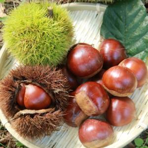 栗 ~縄文時代には主食。ビタミンC、カルシウム、カリウム豊富で高タンパクな栗は、優れた栄養食品です~