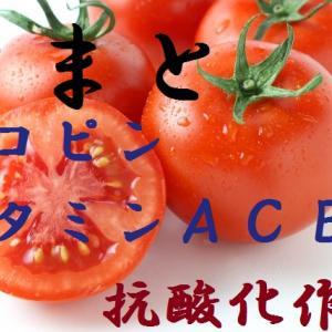 トマト~有毒成分その名はトマチン?分類は果実でも緑黄色野菜。ガンと老化を防ぐ抗酸化作用のリコピン!トマトの栄養・効果・保存方法・選び方・お勧め調理法~