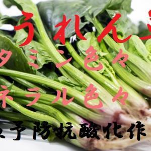ほうれん草~貧血予防、結石の原因になるシュウ酸は大丈夫?  ほうれん草の栄養・効果・保存方法・選び方・お勧め調理方~