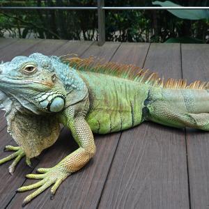 爬虫類は終生飼育が難しい?