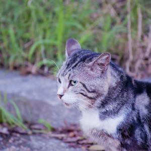 ペットが迷子になった時にとるべき5つの手段