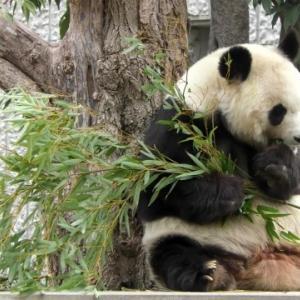 動物達がボランティア?王子動物園70周年記念イベント