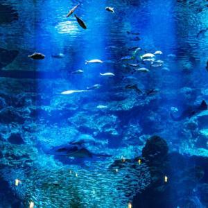 都内の5大人気水族館再開の予定は?