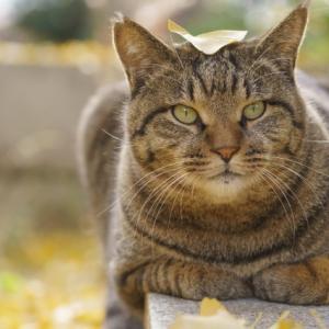 猫と警備員の攻防を猫の特性面から考察してみた