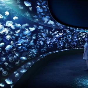 海月空間2020年7月9日にオープン決定:サンシャイン水族館