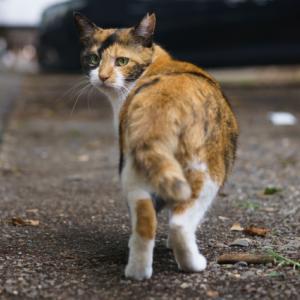 芝園団地の野良猫