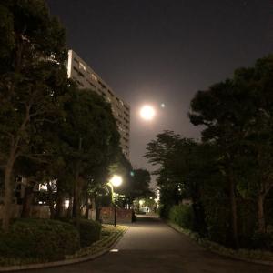 5/7 今宵は満月フラワームーン