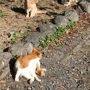 ◆祇園猫ちやん、そうだ京都へ行こう