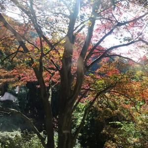◆比叡山 根本中堂は工事、夜は評判の焼き魚 新町通 矢尾定 そうだ京都へ行こう2019