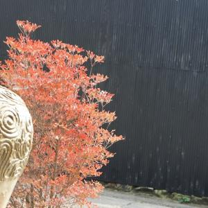 ◆奥嵯峨野の静けさラストナイト鶏白湯らーめん:そうだ京都へ行こう2019