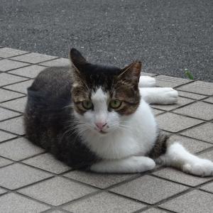 ◆コロナ禍の猫ゃん、いやいや今後は?