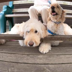 VLOG: 犬との暮らし / 夫婦二人とわんこのキャンプ / 清里テラス