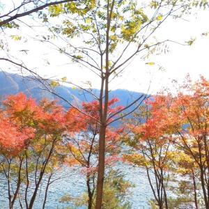 西湖で紅葉キャンプ DAY1