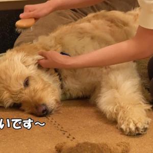 愛犬のクオリティオブライフ QOL