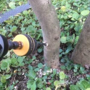 庭木の伐採,抜根,撤去【前編】 自分でDIY挑戦 庭手入れ 庭木抜き