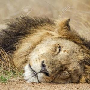眠れる獅子よ 今こそ目を覚ます時だ