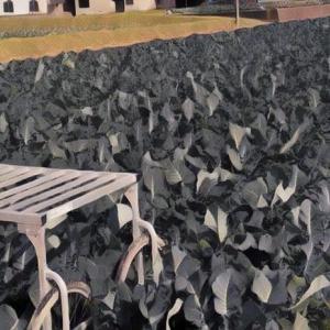 2020/7/5 ・ワソキーニ・ワソッコリー・ワソリック・ワソピー セット野菜も 好評販売受付中♪