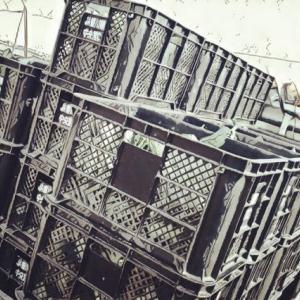 2020/11/10 収穫 再び沈静化