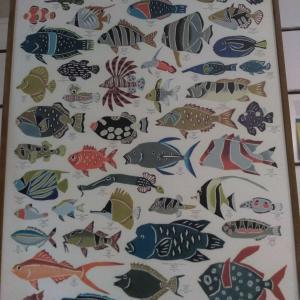 沖縄いってきた! 沖縄の魚