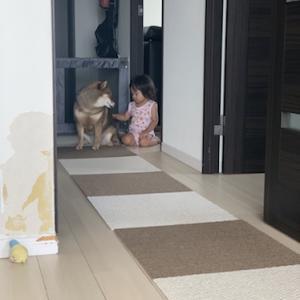 赤ちゃんと犬の同居生活で気をつけた方が良いと思うこと