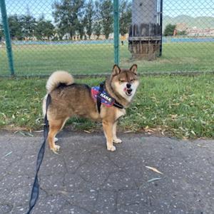 犬の散歩中に不審な目で見られる理由。