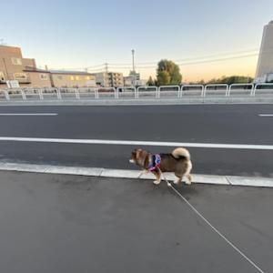 無駄に犬の知識をひけらかす人