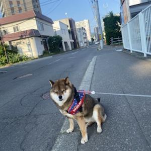 忙しいといつ散歩に行って良いのか迷いますよねという話