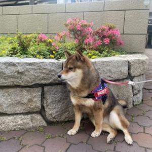 出勤途中にノーリードの犬が突進してきた話