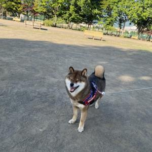 遊園地に行っても犬・・激闘のドッグレース(前編)