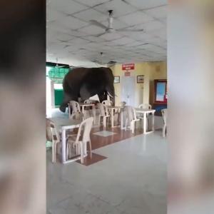 飢えた象が陸軍キャンプの食堂に侵入