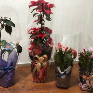 鉢植えのプレゼントは迷惑?