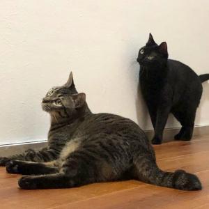 猫がいるお寺 広島市の寺院