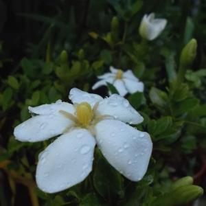 初夏の芳香