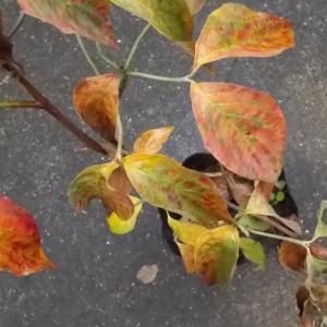 梅雨末と立秋と