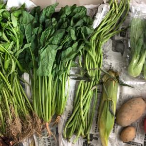 マレーシアの宅配野菜【Vege Express】種類や買い方など