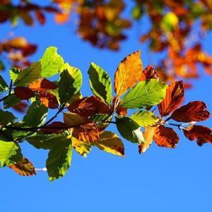 紅葉し始めた木を見上げながら